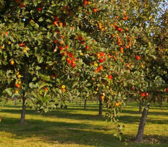 Découverte de l'énergie des arbres à Plomeur